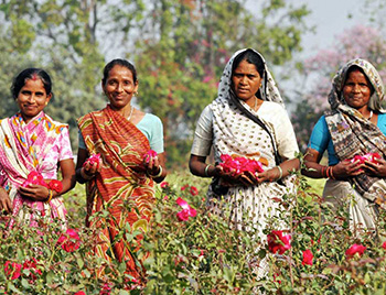 Women in India picking flowers