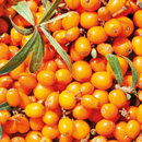 Weleda Sea Buckthorn (Body Care)