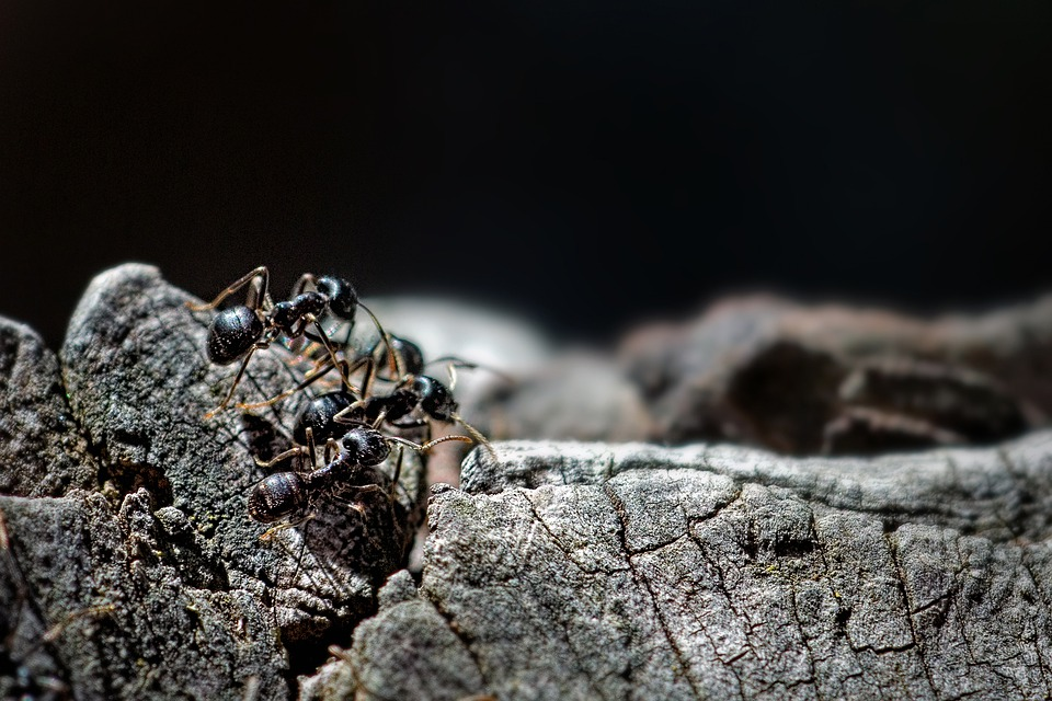 Essential Oils to Keep Bugs & Ants Away